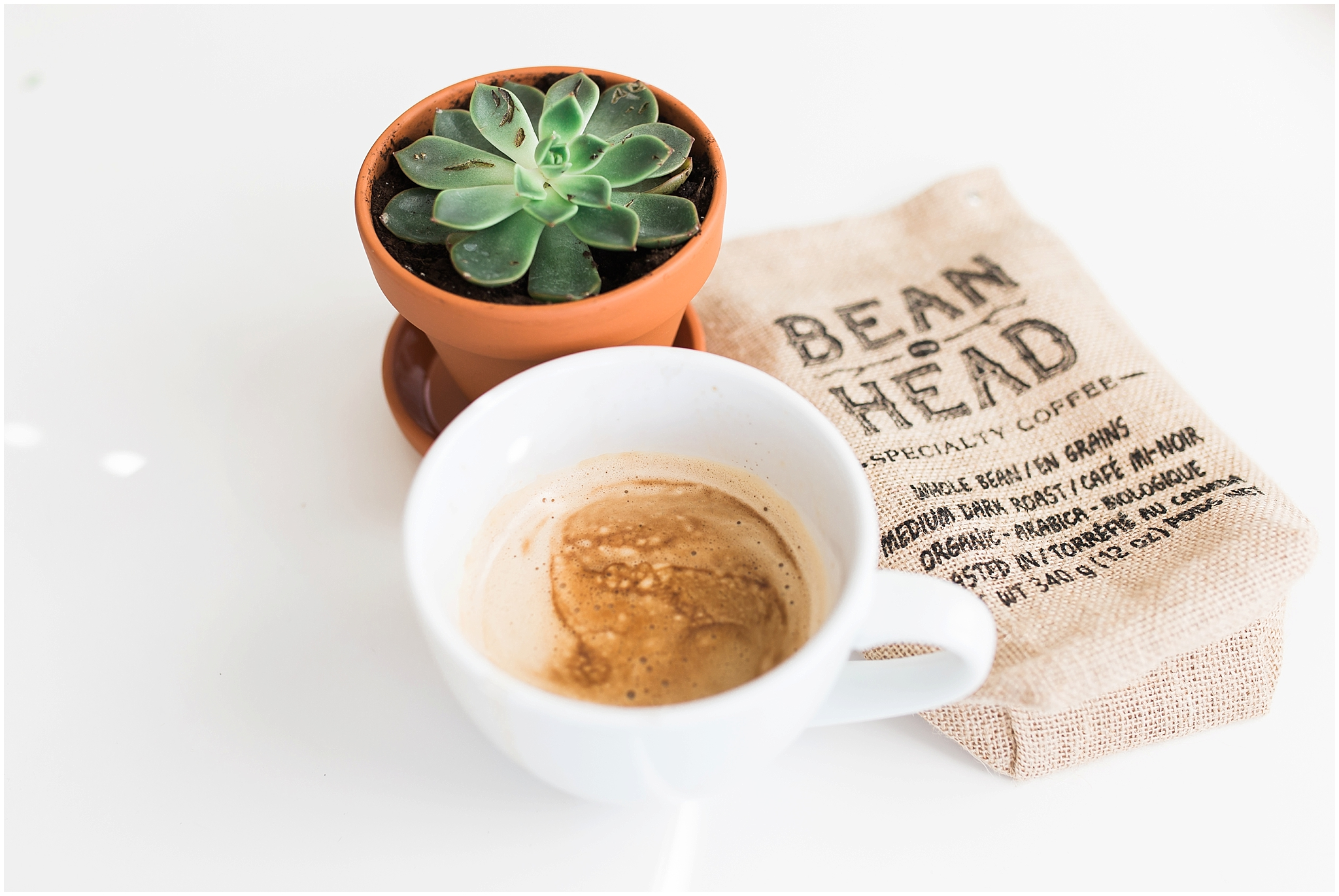 bean head coffee and succulent